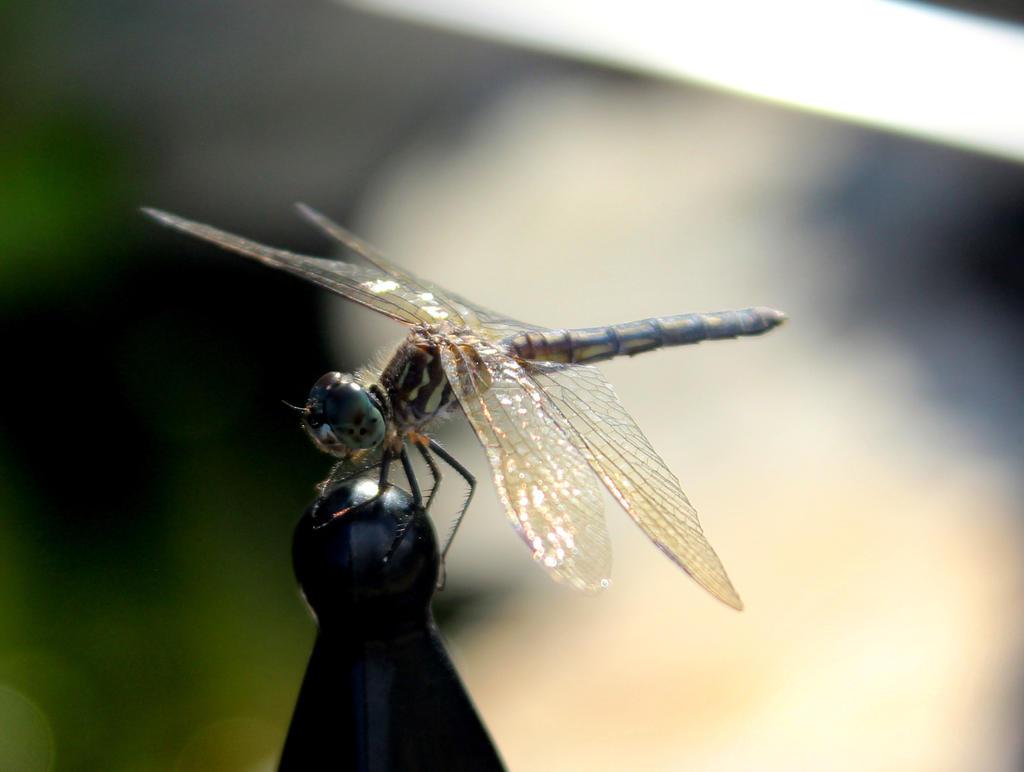 Dragonfly by captainkodak1