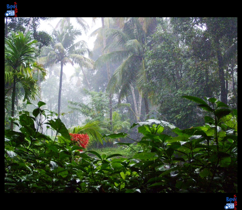 Kerala Monsoon 04 By Impeccablez On Deviantart