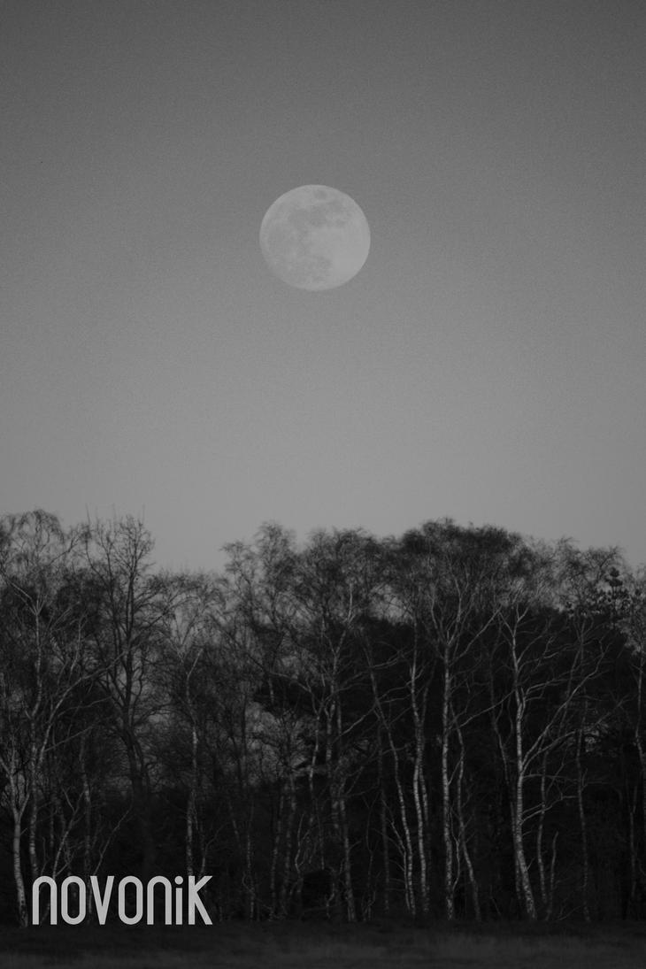 MoonBirchHunter One. by Novonik