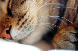 sleeping love by felinefans