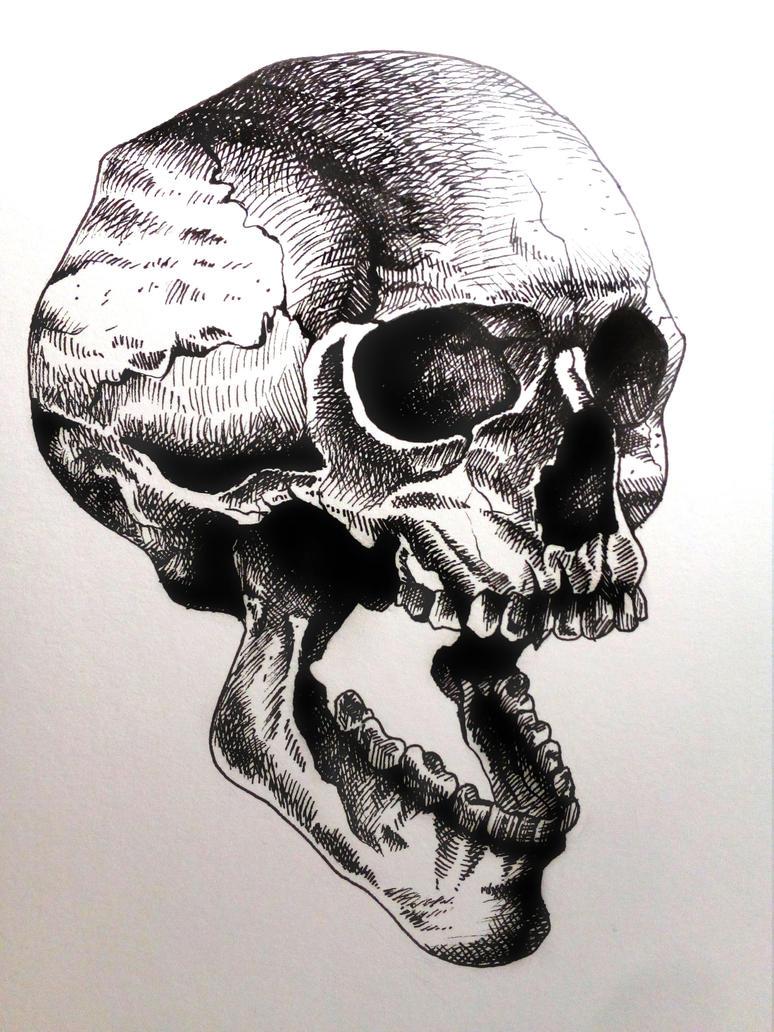 Skull by Krisallys