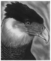 Hawk Graphite Rendering
