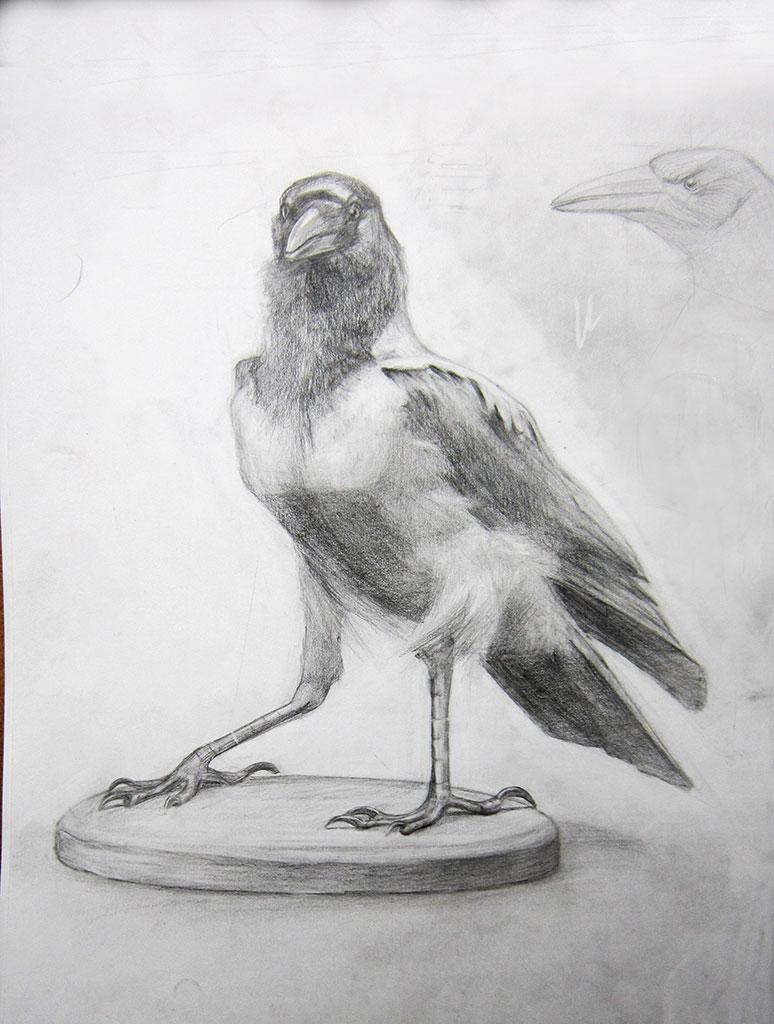 Crow by alverena