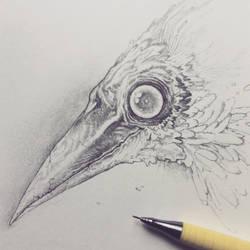 Vonn Sketch 8.11.17