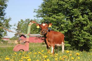 ay calf by purstotahti