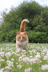 ginger cat among flowers by purstotahti