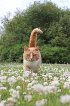 ginger cat among flowers