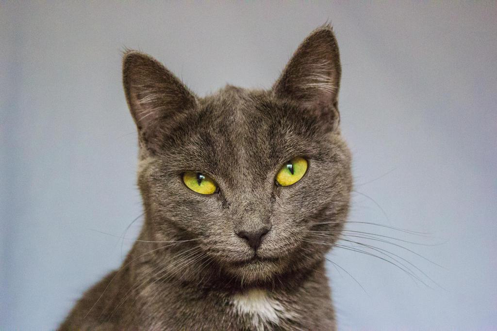 Kitty Charm by purstotahti