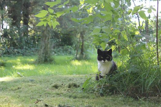 Cat-Guardian of the Garden