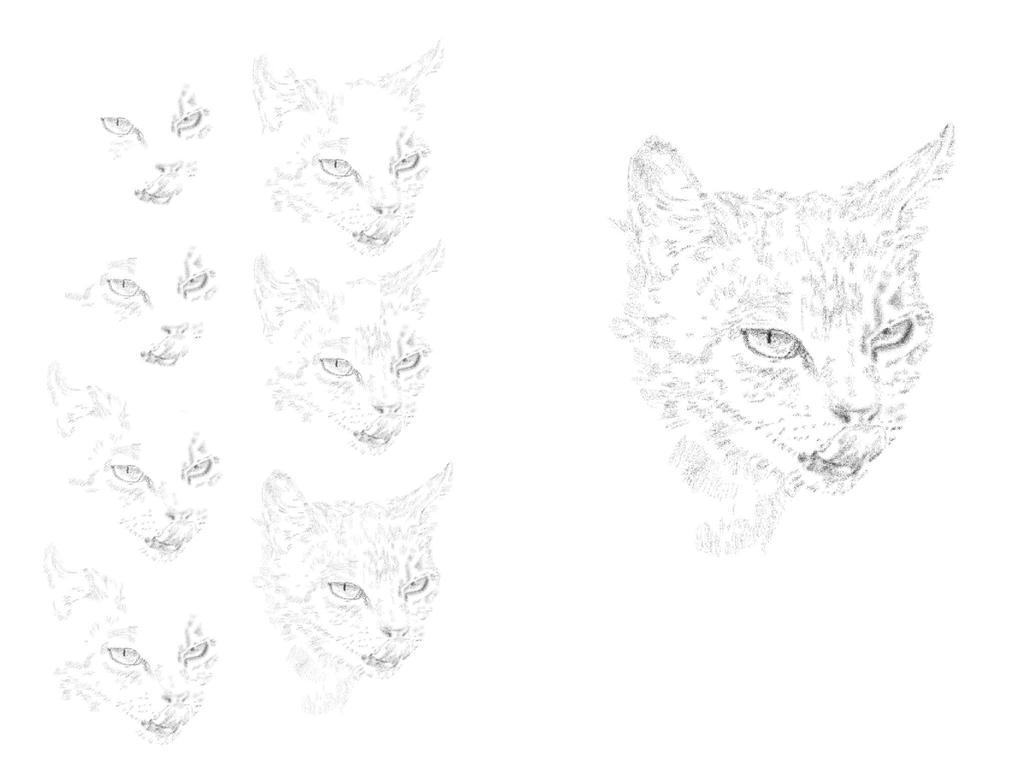 Cat Study Wip by purstotahti
