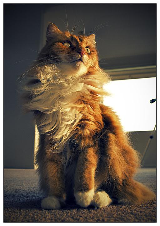 Trainwreck Cat by whhoah