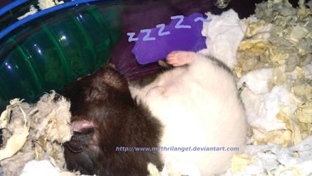 Little Sleeping Truffle by MythrilAngel