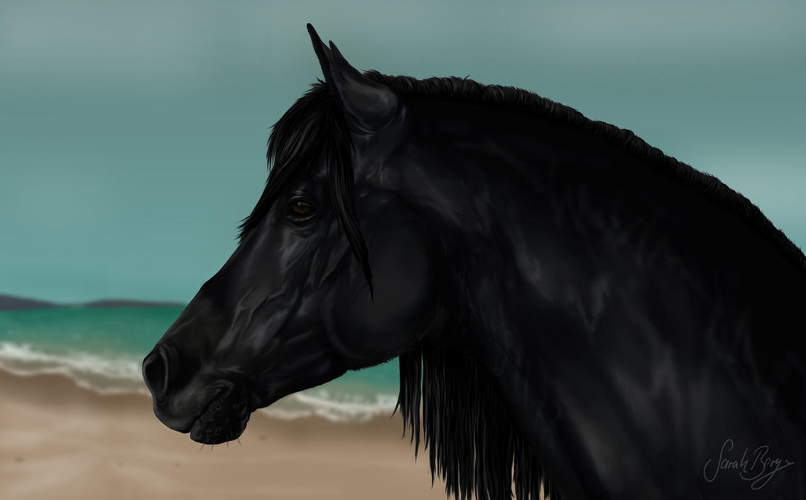 Cass Ole - The black stallion by BLACKNIGHTINGALE81