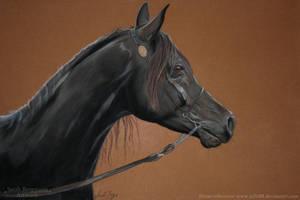 Black arabian horse - Pastel by ooBLACKNIGHTINGALEoo