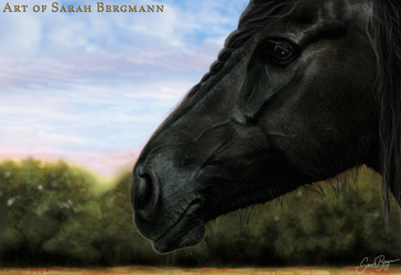 Face of the friesian lady by ooBLACKNIGHTINGALEoo