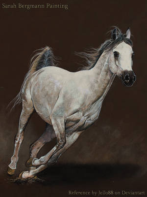 Grey Arabian - Acrylic Painting by ooBLACKNIGHTINGALEoo