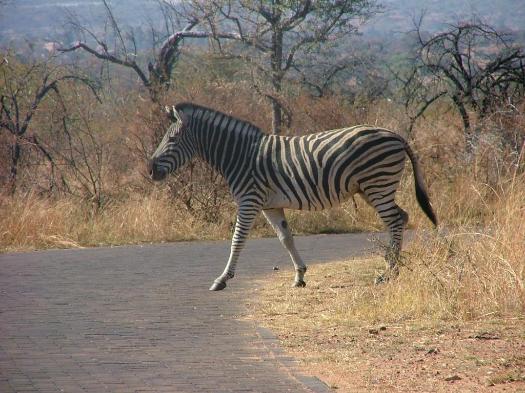 Zebra Crossing Student Room