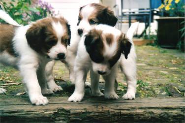 Rosko, Barney en Ronja by Soulslide