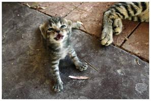 Kitten. by Kalven