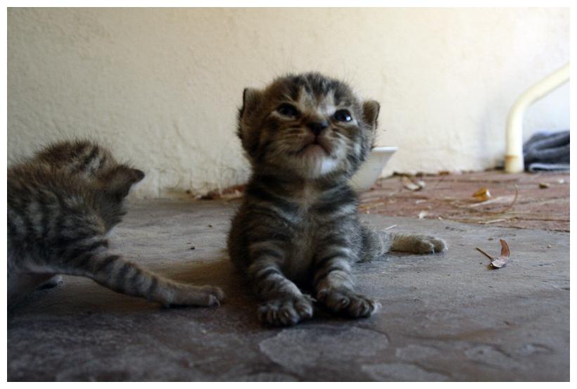 Kitten... by Kalven