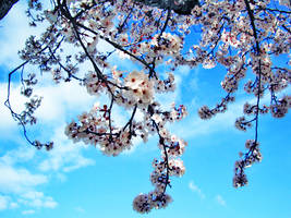 Spring and Sky by Xiila
