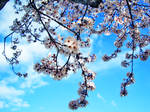 Spring and Sky