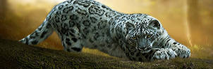 SnowLeopard by LRNarts