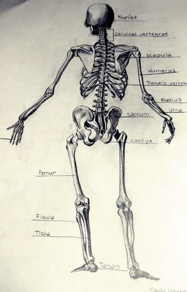 human skeleton back by mahau93 on deviantart, Skeleton