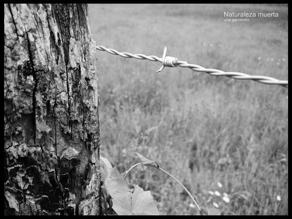 Dead nature by Hallaserke