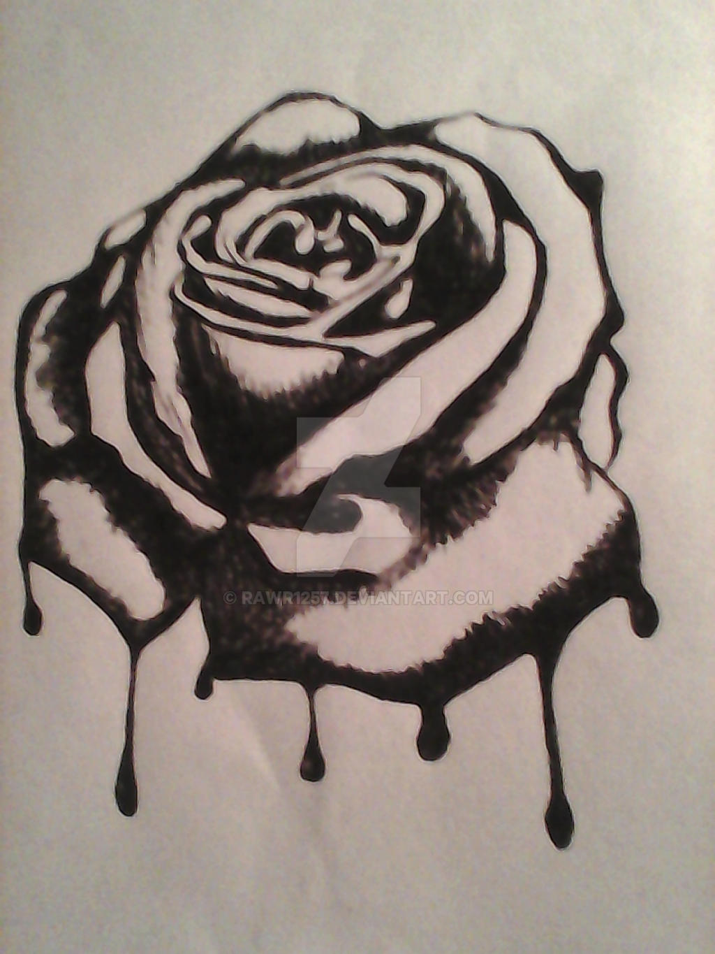 Dongetrabi black rose drawing bleeding images for How to draw a black and white rose