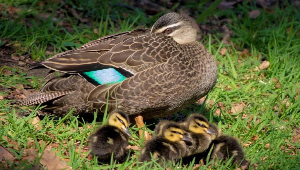 Duckpond_06 by a1samurai