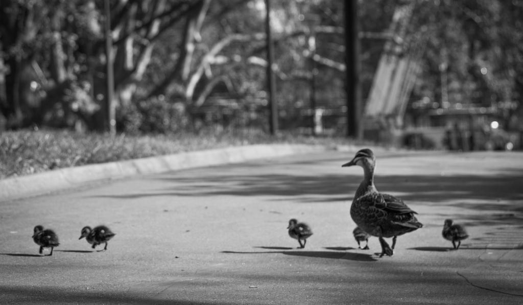 Duckpond_10.jpg by a1samurai