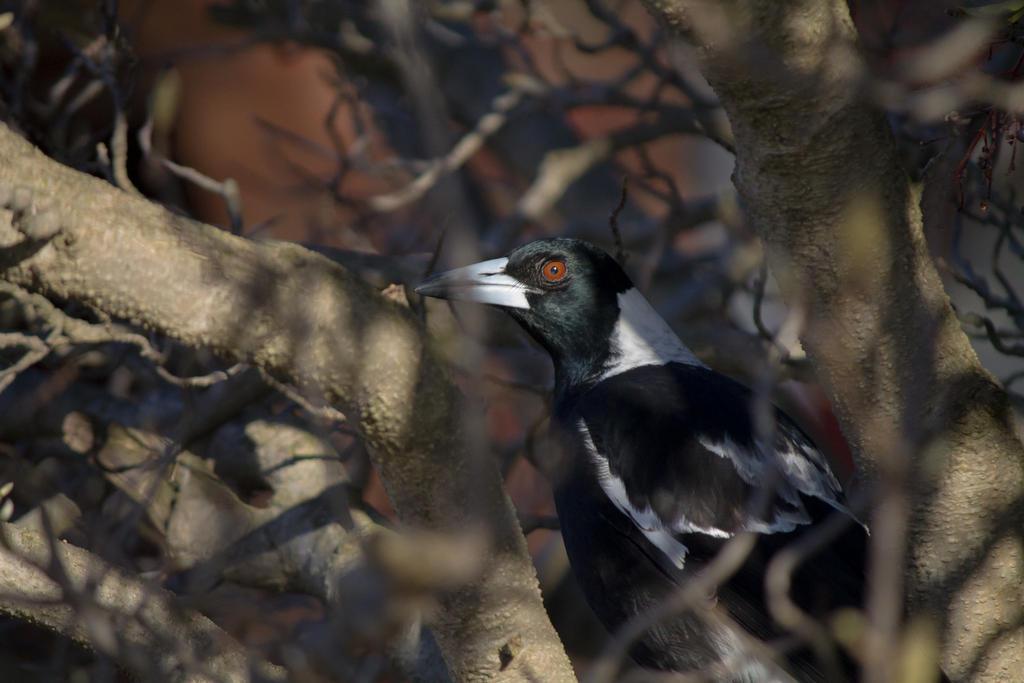 Resting Bird Face by a1samurai