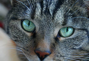 Look me in the eyes... by WhiteHikari