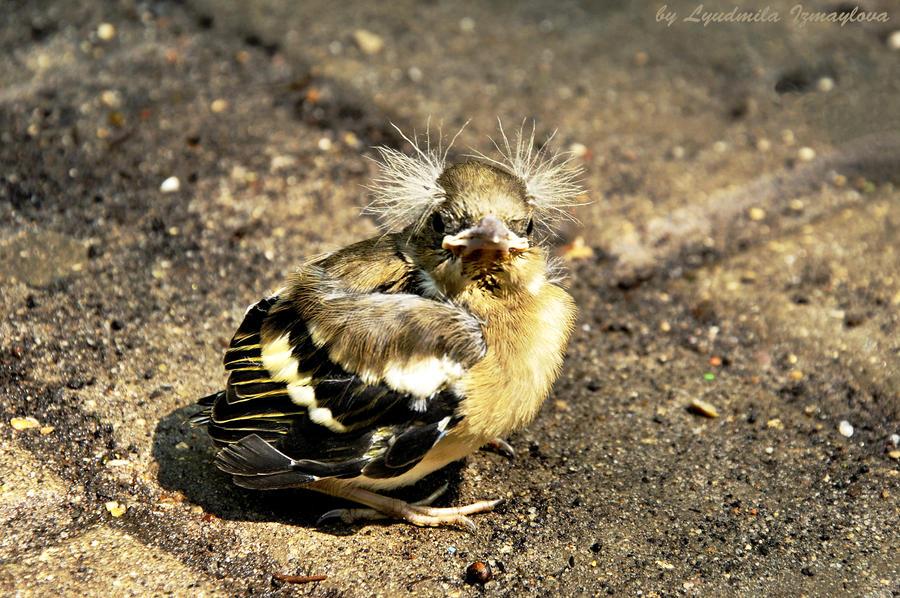 nestling by Lyutik966