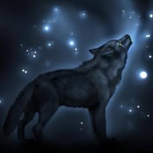 darkmoonwolf22's Profile Picture
