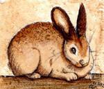 Coffee Rabbit