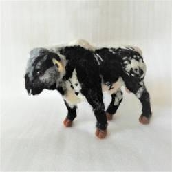 Spotty Dotty Bull