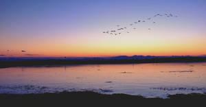 Icy Sunset Steveston Gary Point