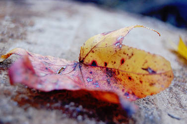 Leaf Wise by PhotoshopFreak