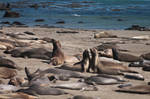 Elephant Seal Beach II