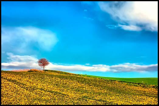 Tuscany Landscape n.21