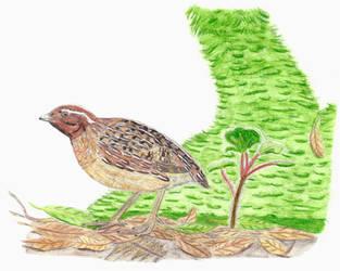 Prehistoric Canaries: Canary Islands quail by DiegoOA