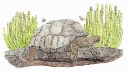 Prehistoric Canaries: Giant Tortoises by DiegoOA