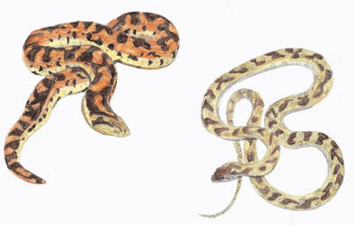 Prehistoric Canaries: Snakes by DiegoOA