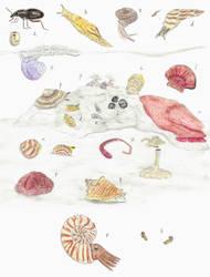 Prehistoric Canaries: Invertebrates by DiegoOA
