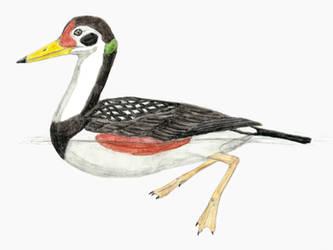 Vegavis: not very duck-like by DiegoOA