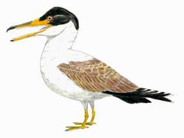 Ichthyornis dispar: new version