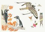 Great Lakes Earth: Birds