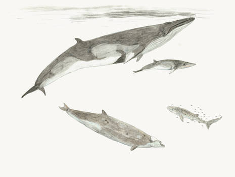 The fossil whales of Santa Maria